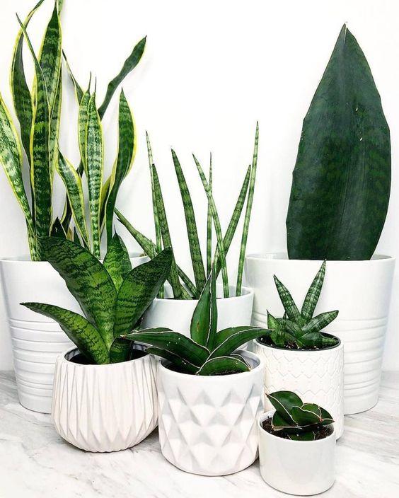 plantas e vasos brancos diversas texturas sobre prateleira