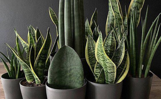 plantas em vasos escuros pequenos