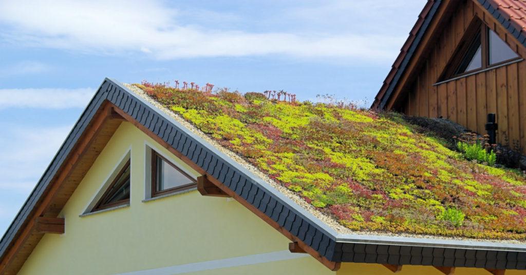 casa de concreto com telhado florido