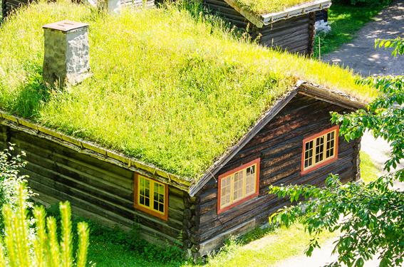 telhado verde em casa de madeira no campo