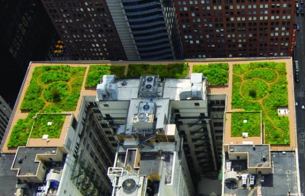 grande edifício em centro urbano com laje teto verde
