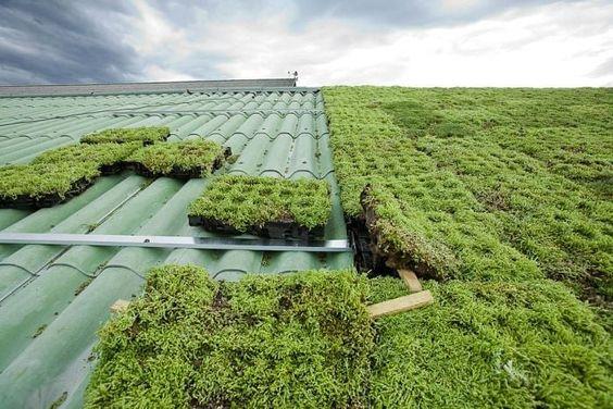 telhado com módulos de terra e vegetação