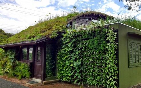 casa com telhado e parede verde