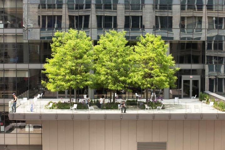 telhado verde em grande edifício com árvores grandes