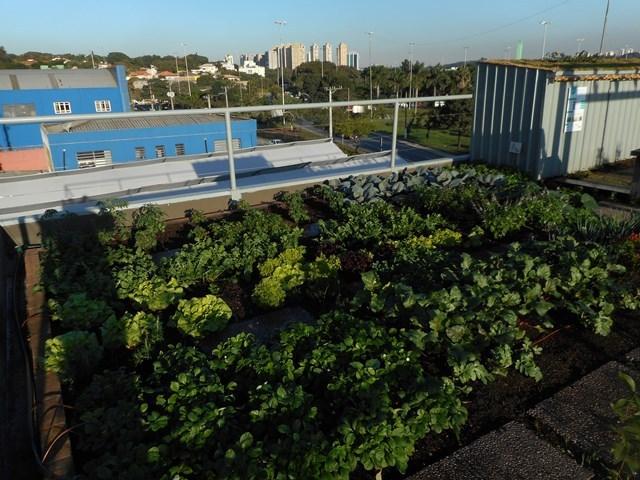 telhado verde tipo semi intensivo