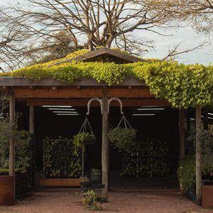 galpão com estrutura de madeira com teto verde  e plantas suspensas