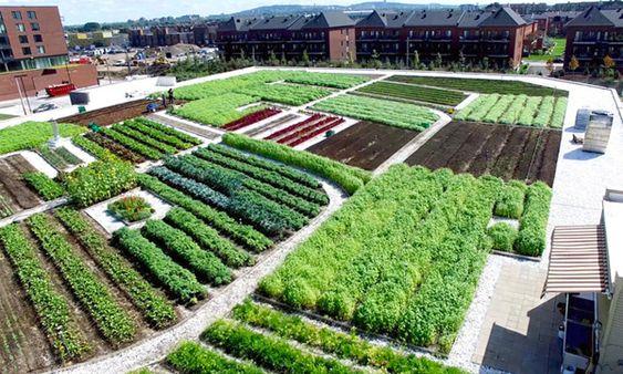 teto verde em edificio com horta urbana