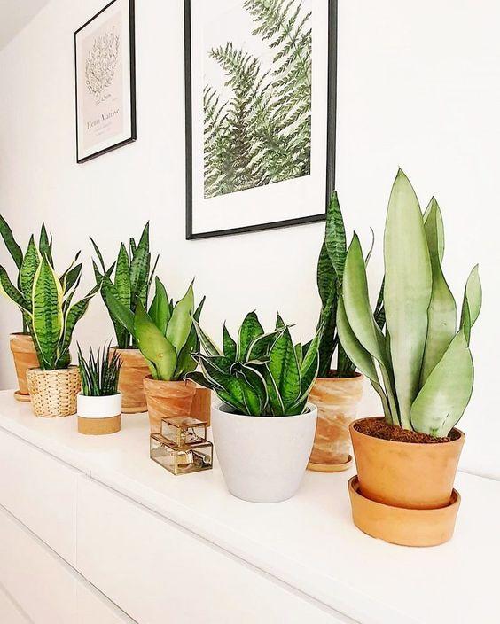 todas as espécies de plantas em vasos diversos e quadros na parede