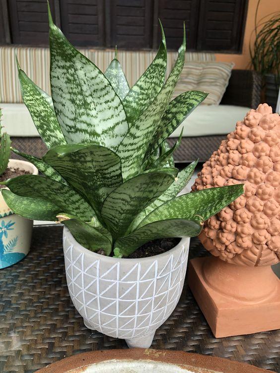 vaso pequeno de planta em sala de estar