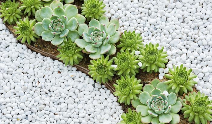 planeje seu jardim