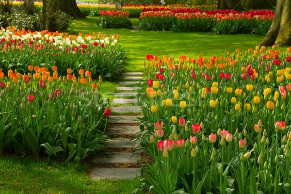 caiminho entre as flores
