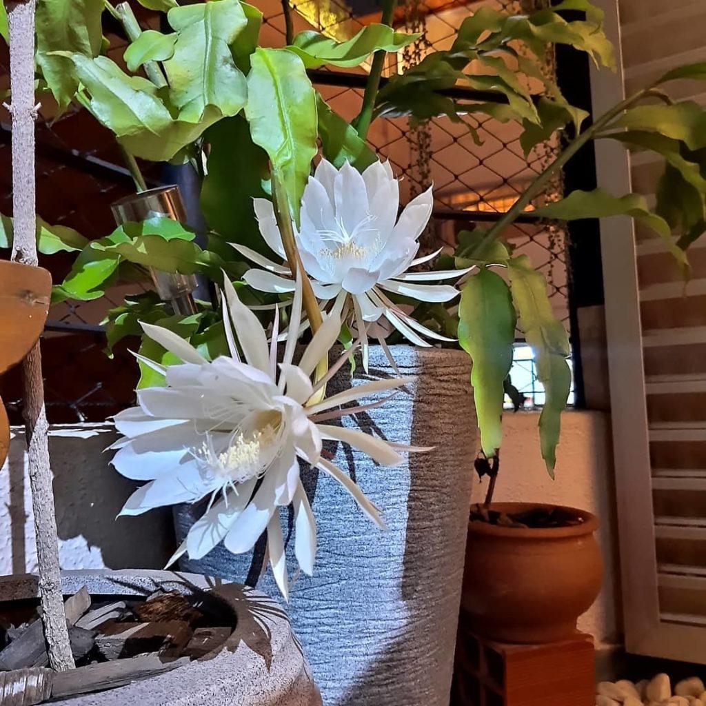plantas em vasos altos