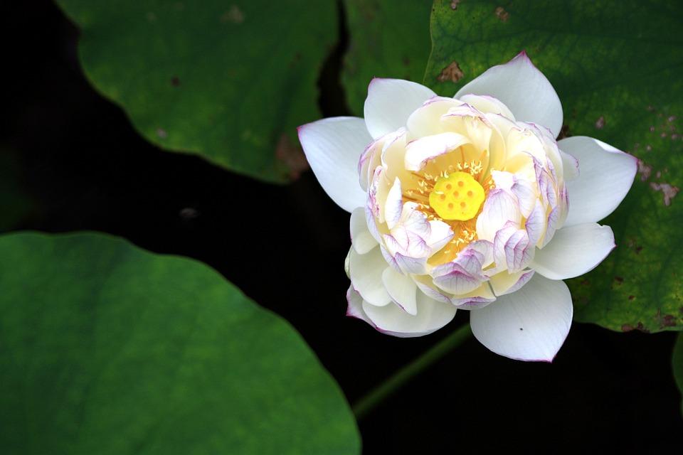 flor desabrochando