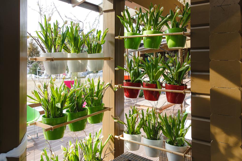 horta vertical colorido