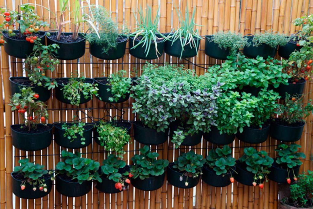 horta  simples
