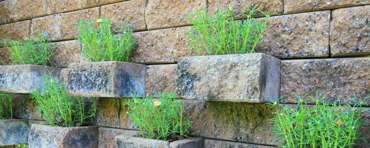horta com pedras