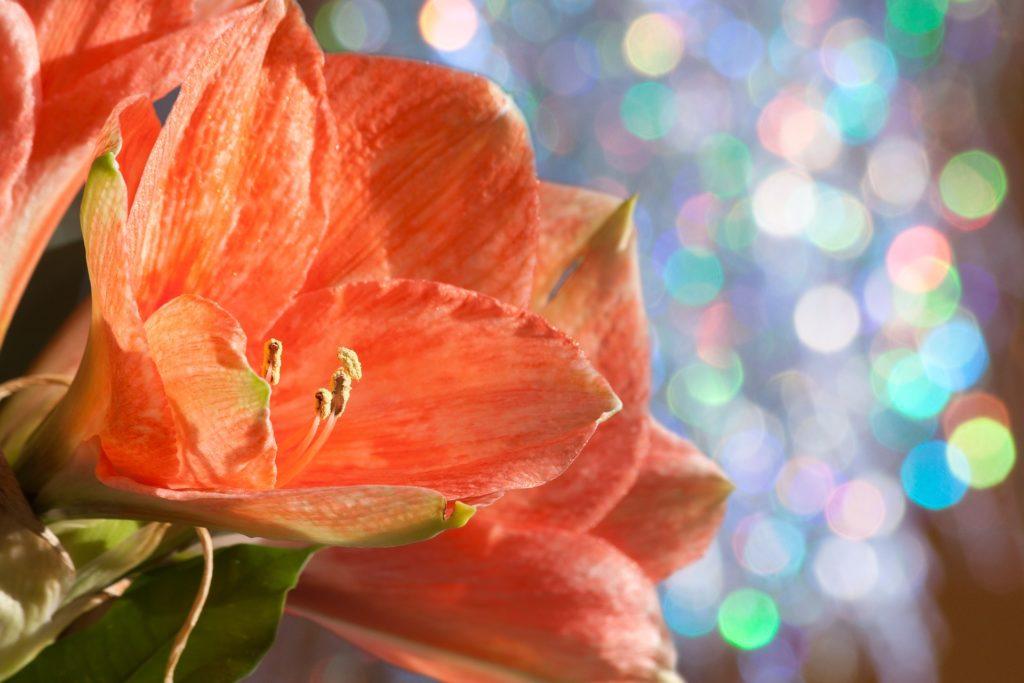 flor com tonalidade laranja