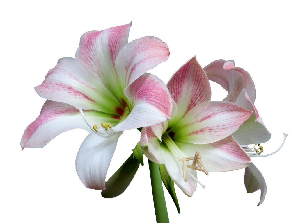 flor delicada com mesclas