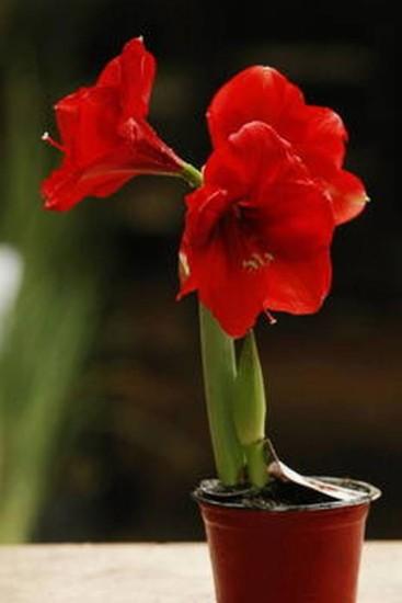 pequeno vaso com flor