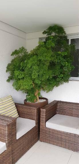 árvore média dentro de casa