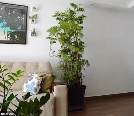 faça composições com outras plantas no ambiente
