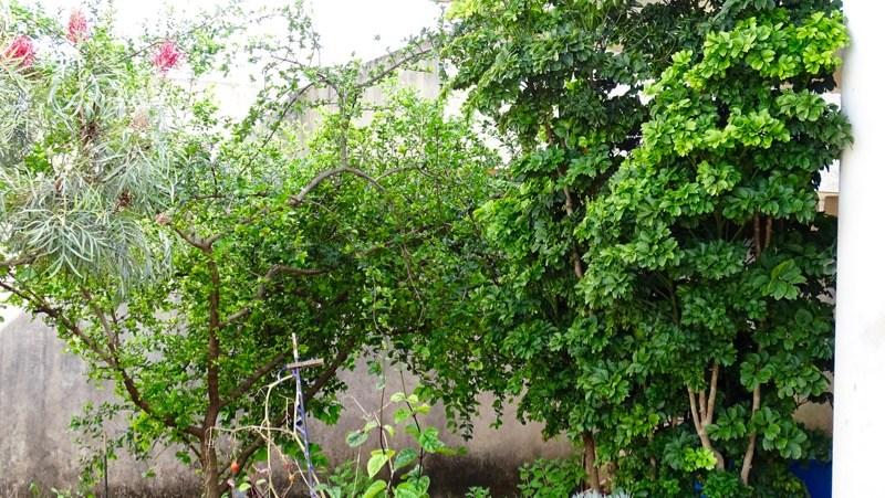jardim arborizado com árvore da felicidade
