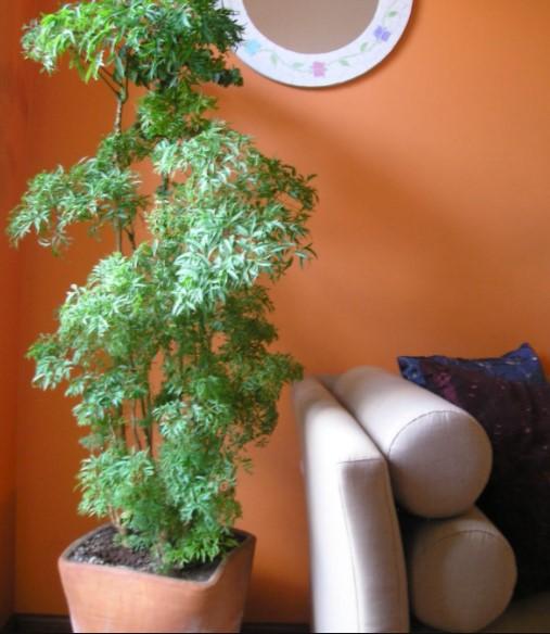 árvore da felicidade ao lado do sofá