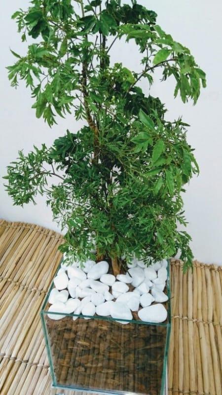árvore no vaso