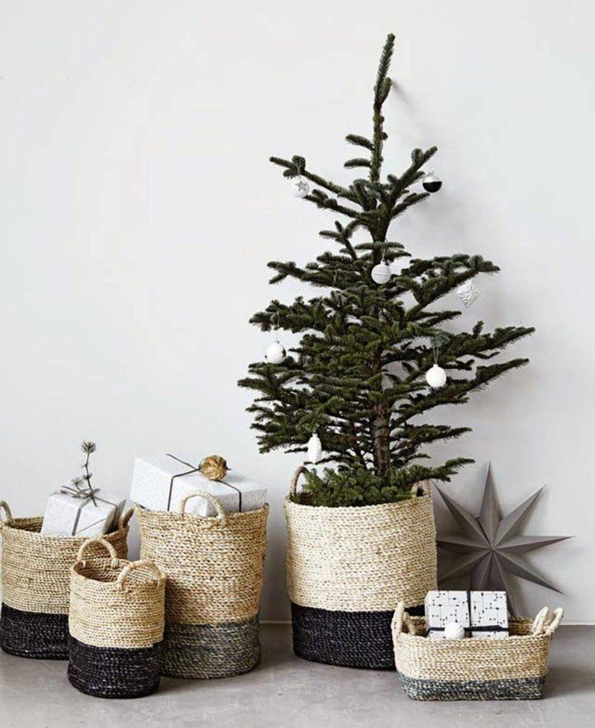 árvore e presente em cachepôs