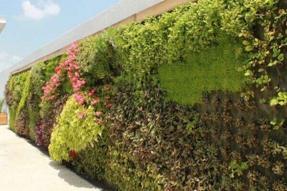 muro revestido com plantas