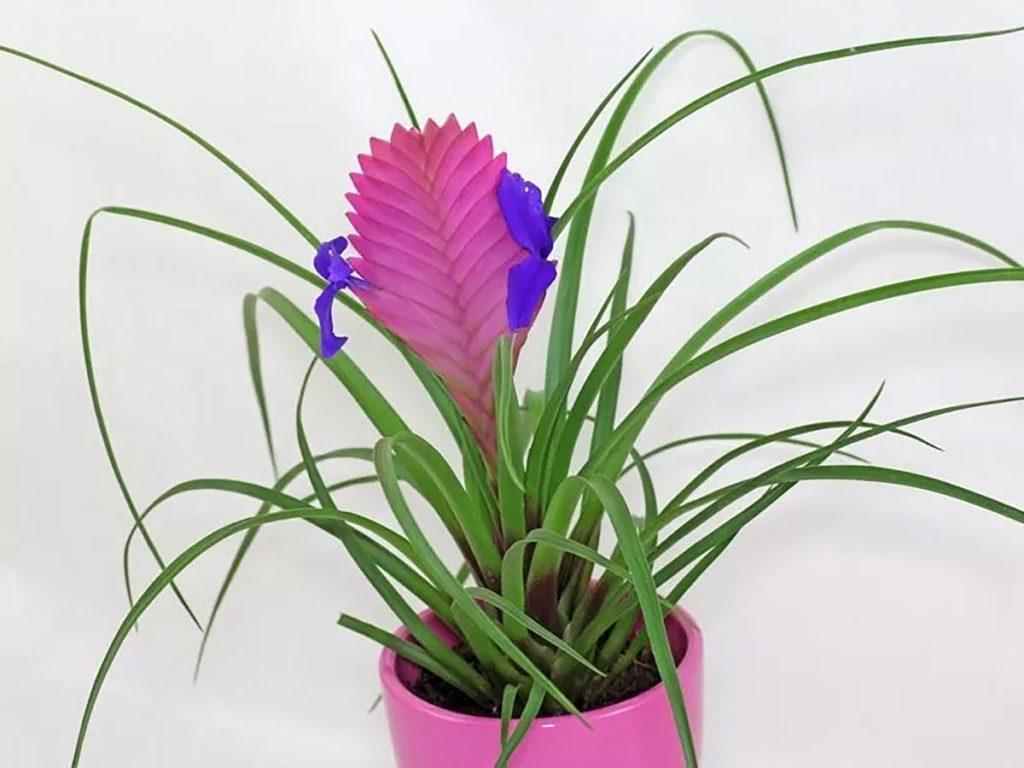 vaso combinando com a flor