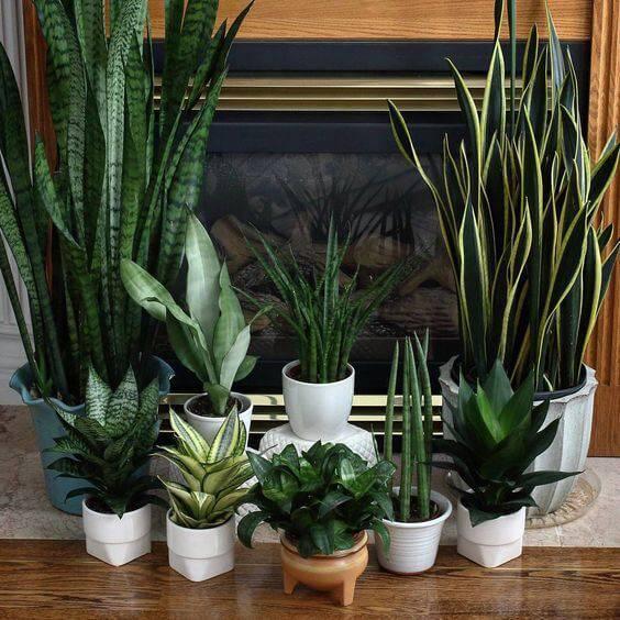 composição de plantas