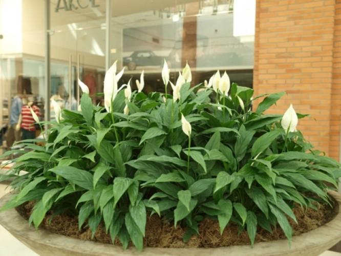 jardim externo de plantas