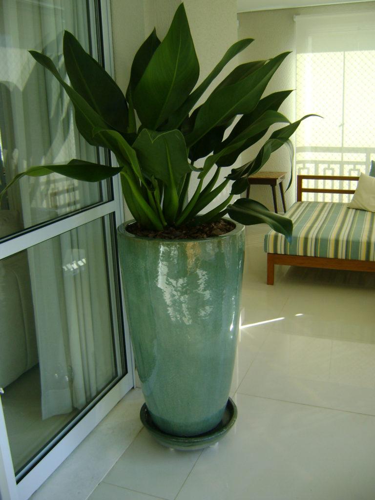 planta ornamental interna