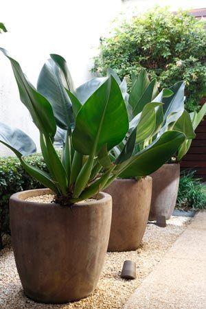 planta ornamental externa