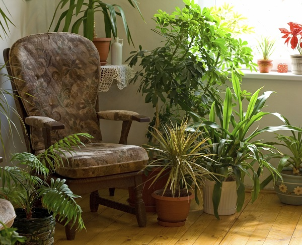 plantas trazem vida