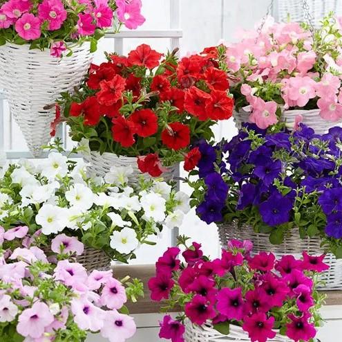 lindos cestos de flores