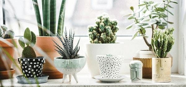 vasos criativos para plantas