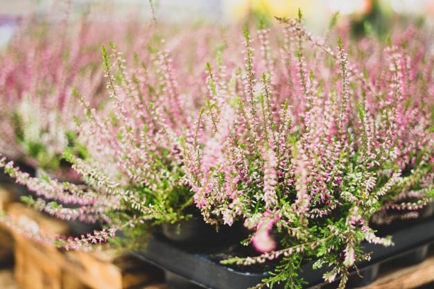 planta ornamental delicada