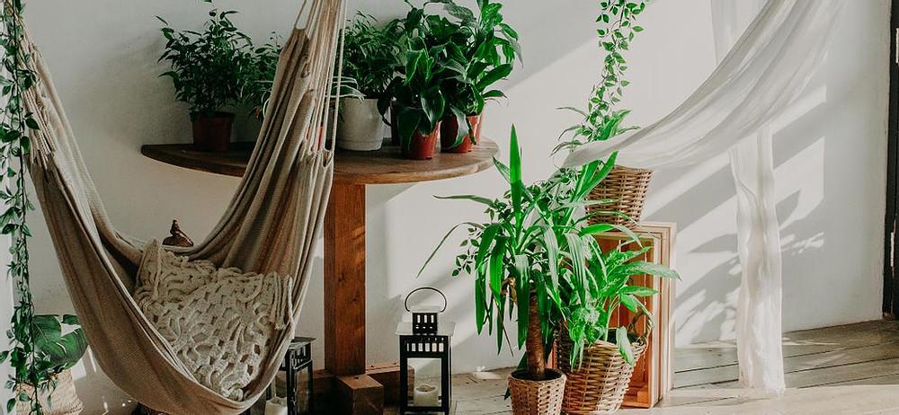 planta ornamental variadas