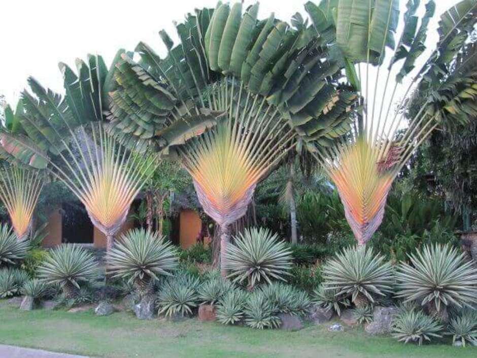 composição de várias plantas
