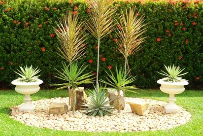 planta ornamental no jardim