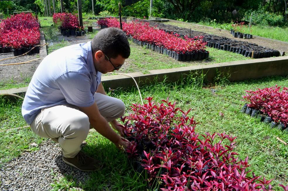 plantação de planta ornamental