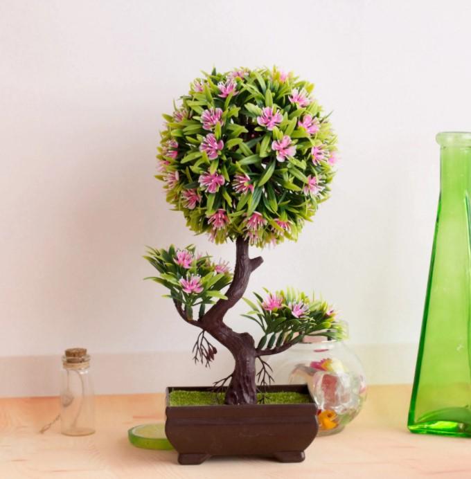 falso bonsai