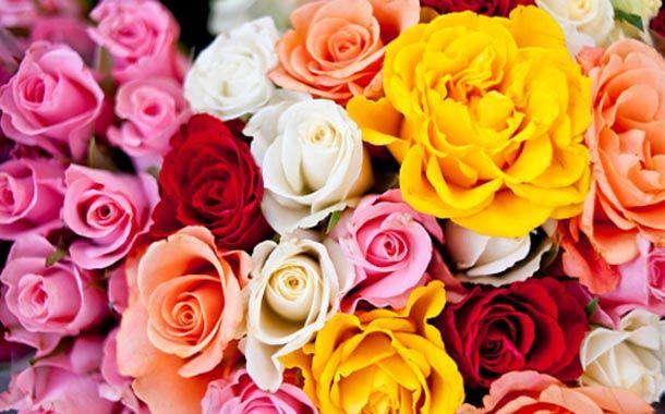 diversas cores de rosas