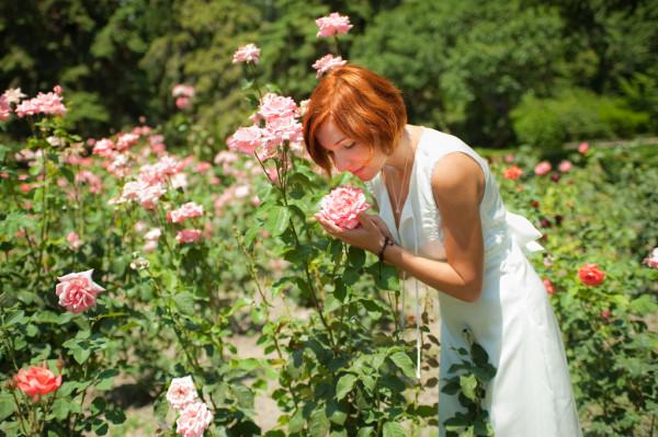 aroma da rosa
