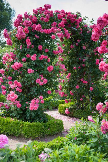 arcos com rosas