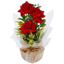 vaso de rosas vermelhas