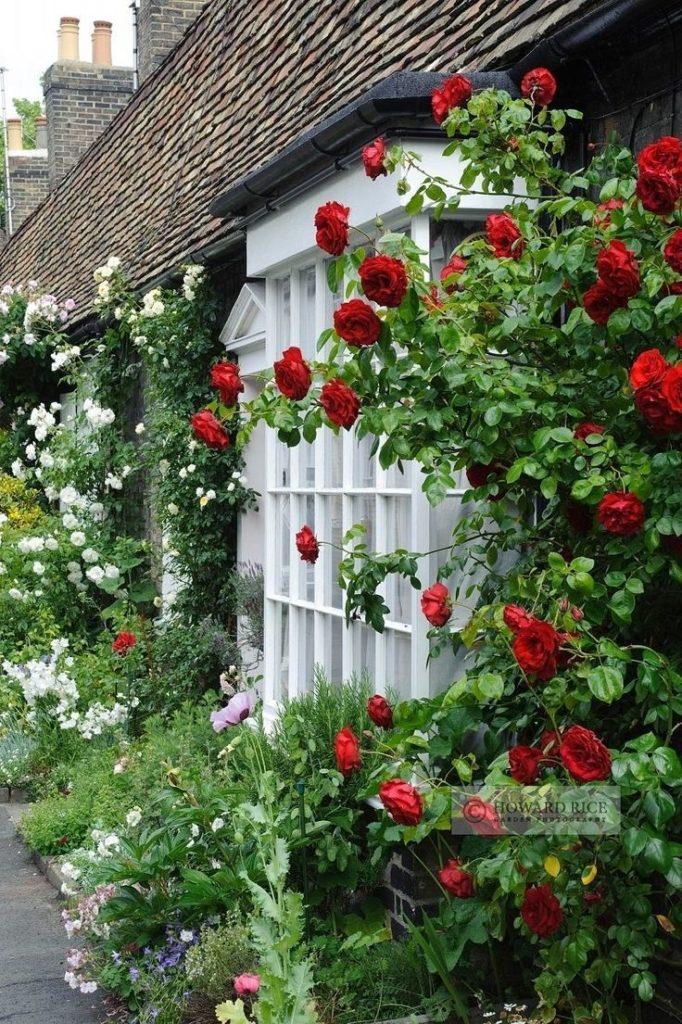 jardim com rosas