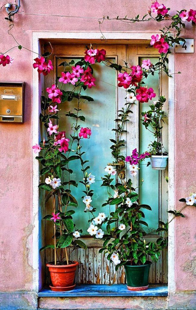 roseira na janela